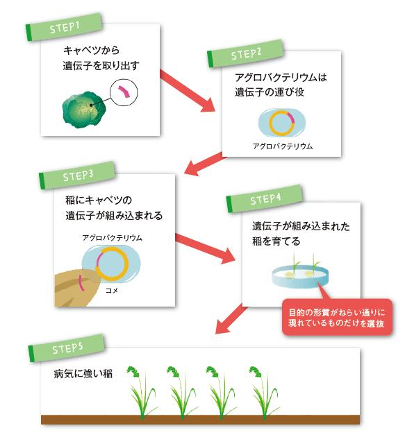 遺伝子 組み換え 食品
