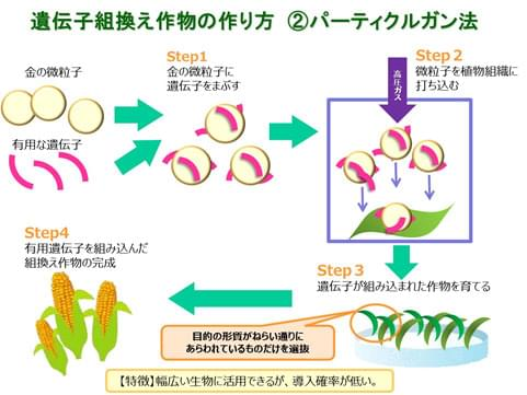 遺伝子組み換え作物の作り方 パーティクルガン法