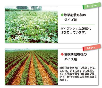 除草剤耐性作物